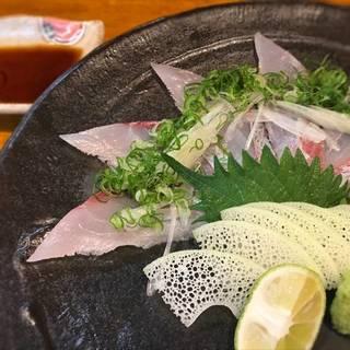 石川県漁協直送 ヒラマサの薄造り
