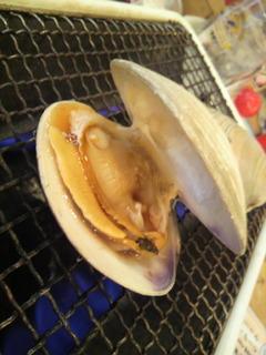 活白蛤の殻焼