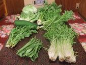 千葉県産無農薬有機栽培の野菜