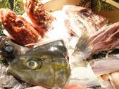 築地直送!新鮮煮魚、焼き魚