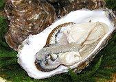 殻牡蠣Lサイズ
